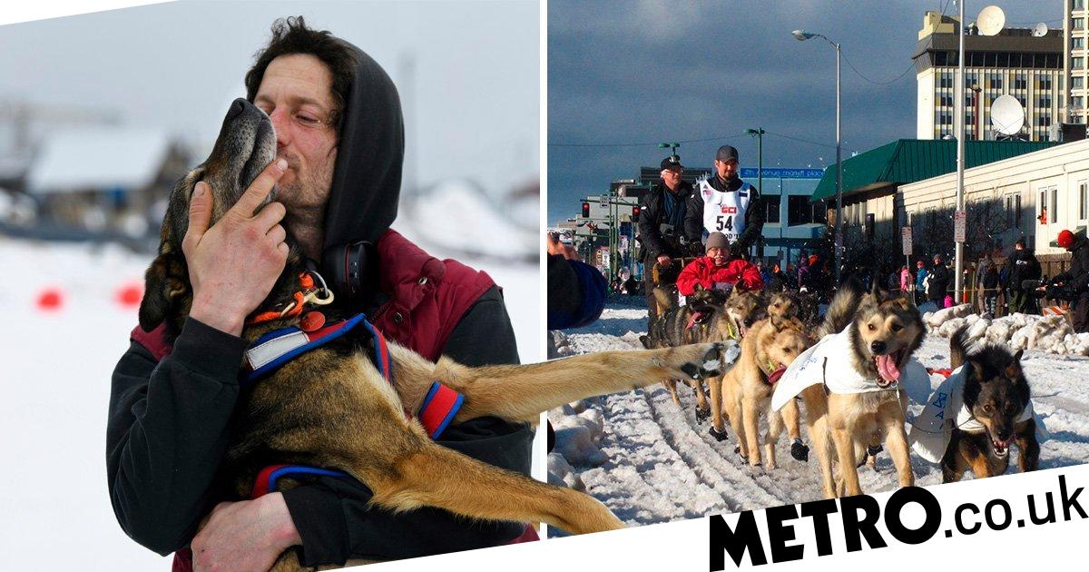 Sled dogs go on strike mid-race when leader shouts at one of them