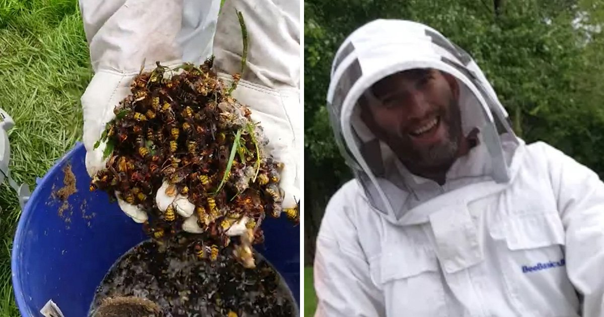 Dad with wasp 'phobia' now kills them 'for fun'