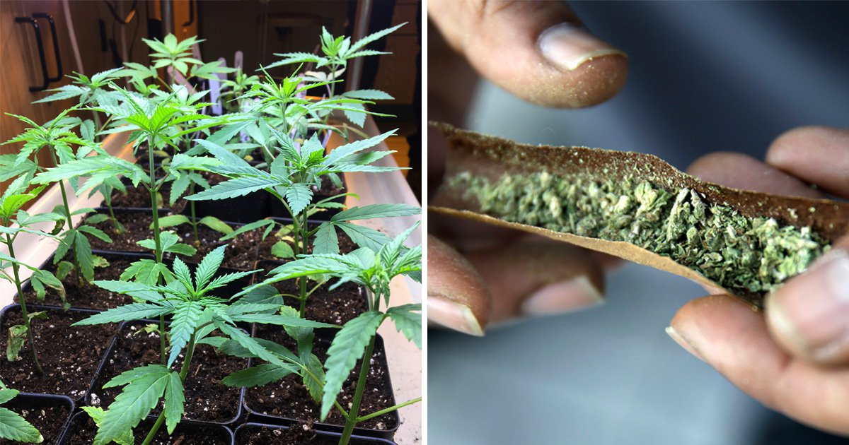 Medicinal cannabis legalisation should of been the end of my pain but nothing has changed