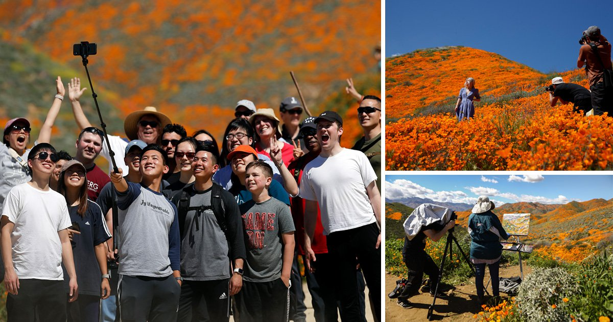 Poppy field forced to close after 150,000 people show up to take selfies