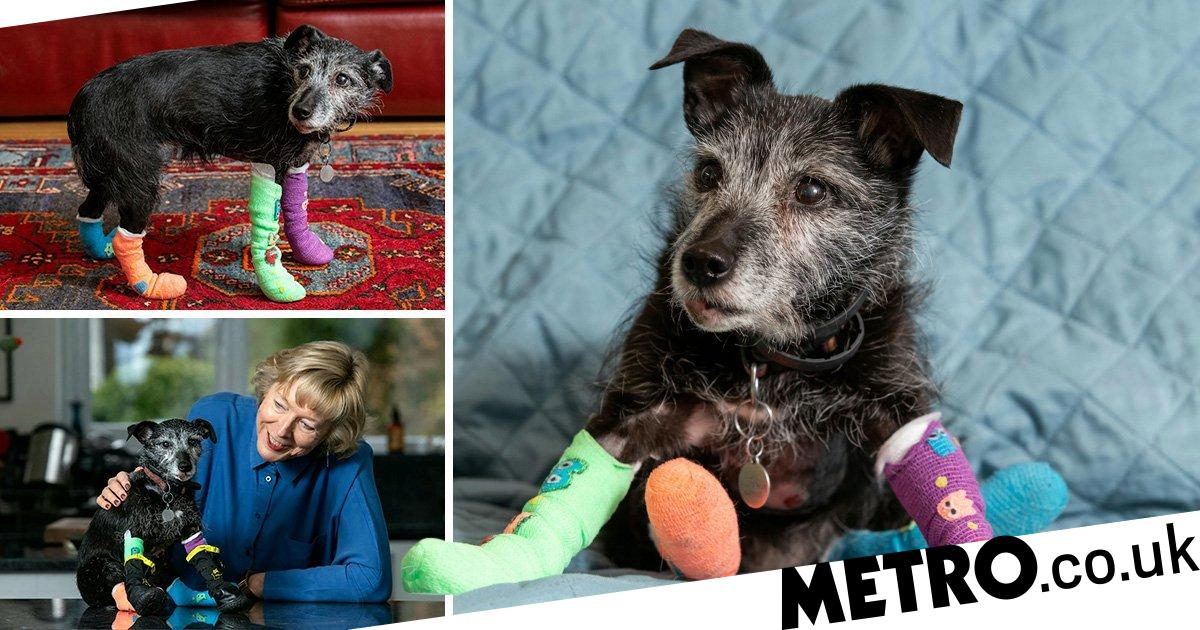 Jenny the dog survives being dragged 300m when her lead got attached to a car