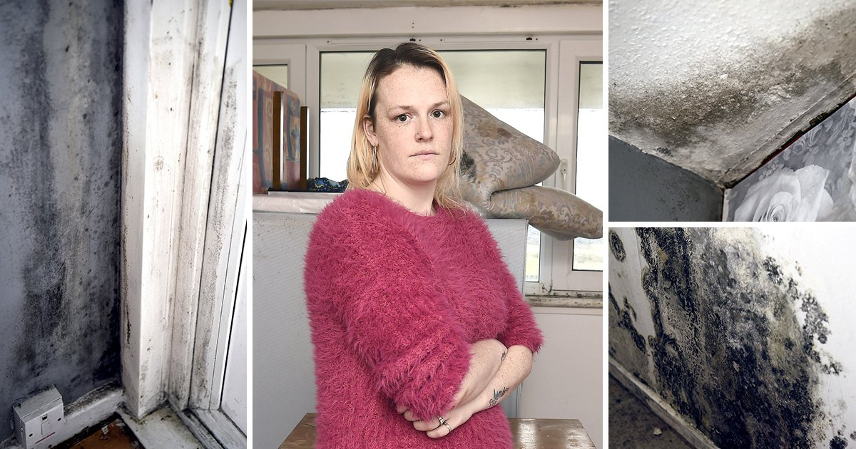 Family forced to live in flat filled with mould and rotting windows