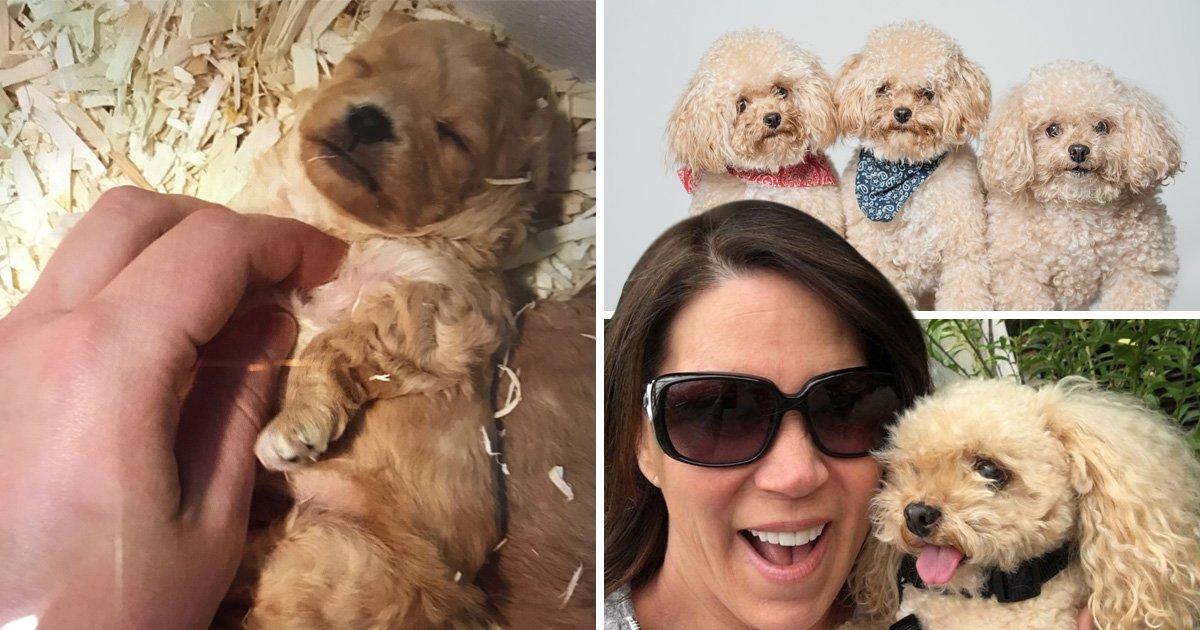 Dog owner vows to keep cloning her beloved pooch so it never dies