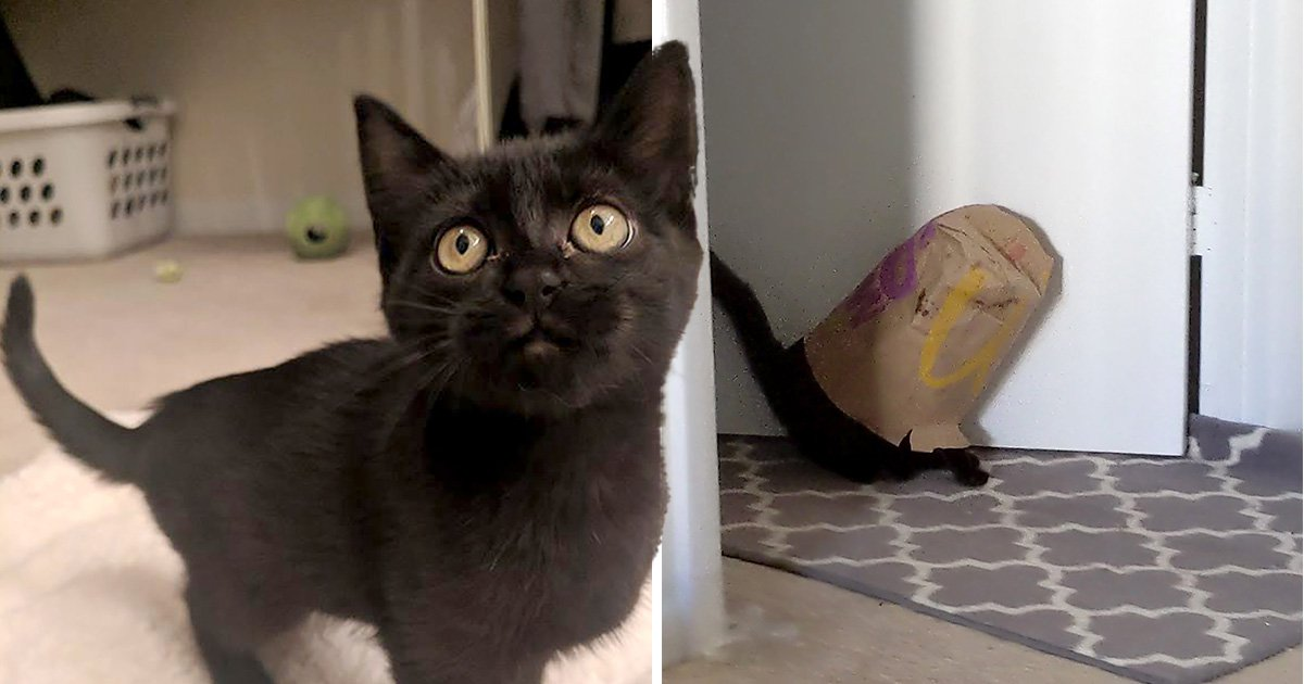 Kitten tries to play it cool by sneaking out the room after getting head stuck in McDonald's bag