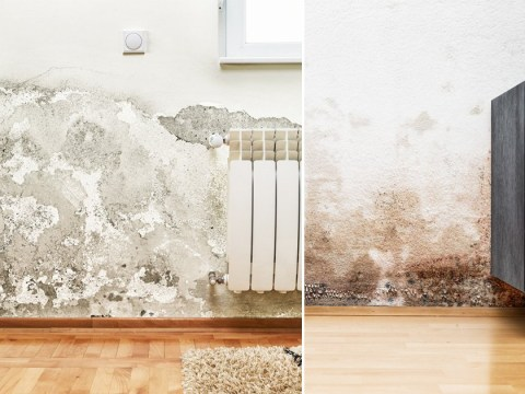 You can now sue your landlord over damp and mould