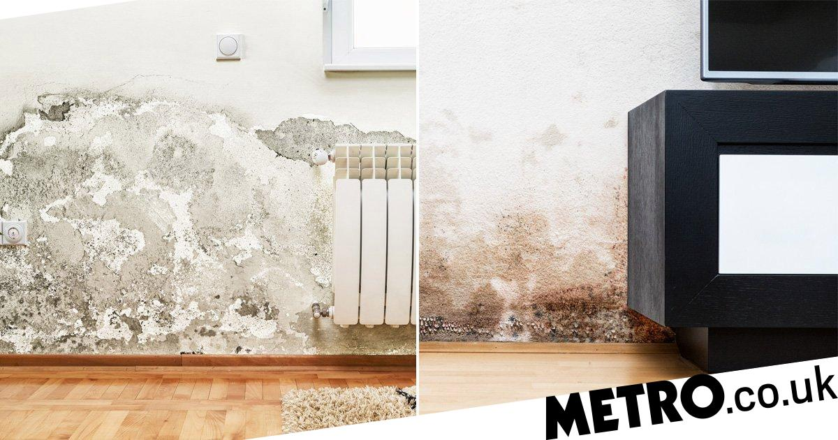 You can now sue your landlord over damp and mould | Metro News