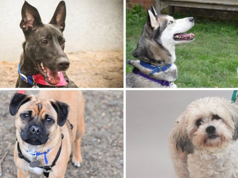 It's National Puppy Day, so here are nine fantastic dogs who need a new home