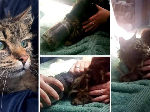 Curiosity almost killed the cat who got her head stuck in jar