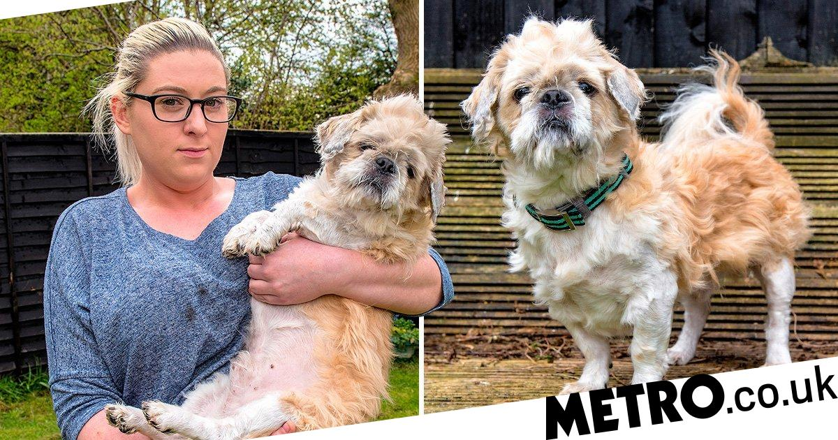 Owner fuming over dog's £250 botched hairdo