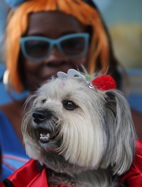 "A carnival reveller and her dog take part in the ""Blocao"" or dog carnival parade during carnival festivities in Rio de Janeiro, Brazil, March 2, 2018. REUTERS/Sergio Moraes"