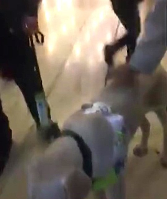 Outrage after security guard orders blind man with dog out of shopping centre picture: BPM METROGRAB