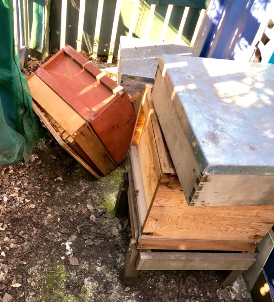 Burglar covered in stings after landing on hive filled with 80,000