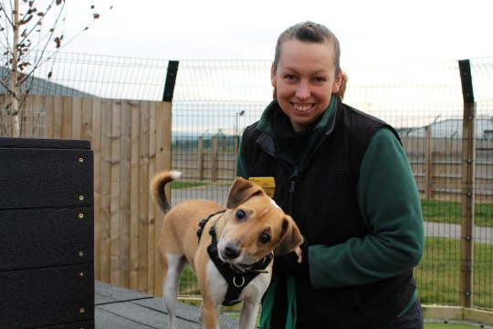 Alex, the four-year-old terrier with carer Jackie. See SWNS copy SWPLdog: Staff at an animal shelter are looking for 'guide humans' to adopt an unlucky puppy that suddenly went blind overnight. Alex, a four-year-old terrier, has been living at the centre since October and was popular with staff as soon as he arrived. But a short while later they noticed that Alex was walking into things so he was sent to the vets.