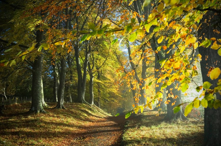 Dirt track through colourful autumn woodland with dappled sunlight - Ross-shire, Scotland, UK.