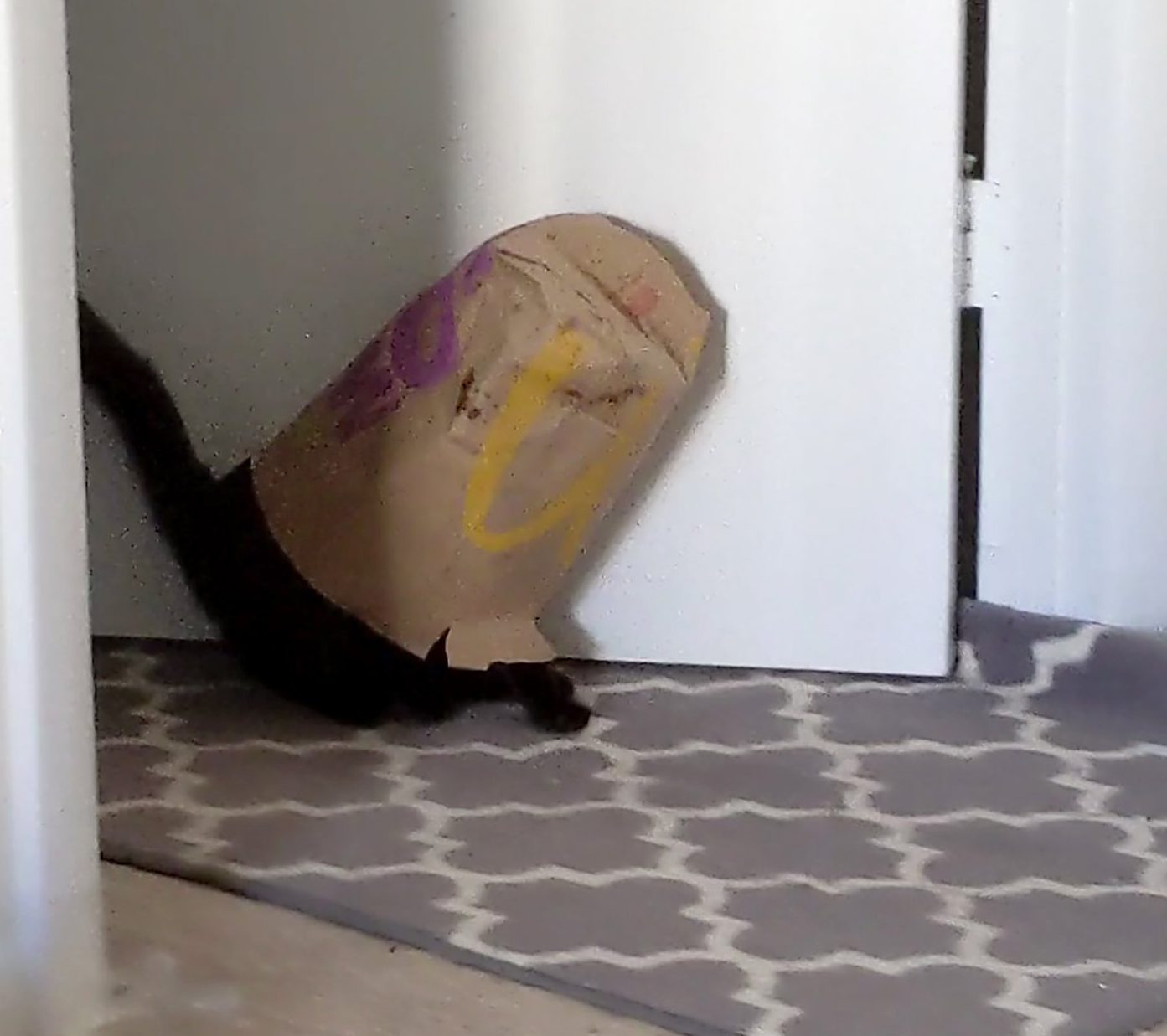 PIC FROM Kennedy News and Media (PICTURED: Velma the cat stuck in a paper Mc Donald's bag) TThis greedy kitten tried to play it cool when she got stuck in a McDonald's paper bag - blindly walking backwards out of the room as if trying to avoid being laughed at. Drew LaFasto and her fianc?? Zach Ellis had tossed the fast food bag to the side while enjoying their meal last Sunday and nosy Velma - known for loving human food - decided to snoop inside. When the eight-month-old short-haired black kitten found the bag empty she tried to back up, only for the bag to get caught on her and stuck on her head. SEE KENNEDY NEWS COPY - 0161 697 4266