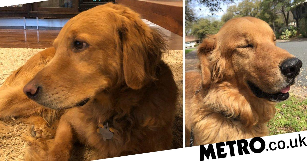 Hank the dog saves his family from a massive fire in their garden