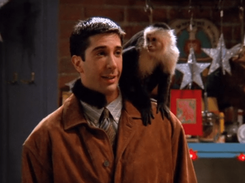 David Schwimmer actually hated Marcel the monkey in Friends and honestly we're broken