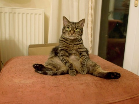 A bored pussy cat stole the first episode of Mums Make Porn as it sat legs akimbo