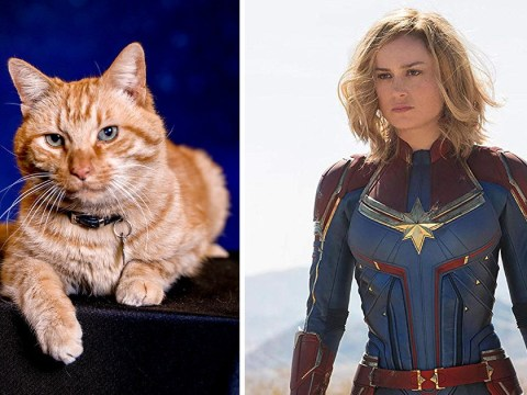 Brie Larson was 'severely allergic' to Captain Marvel cat Goose