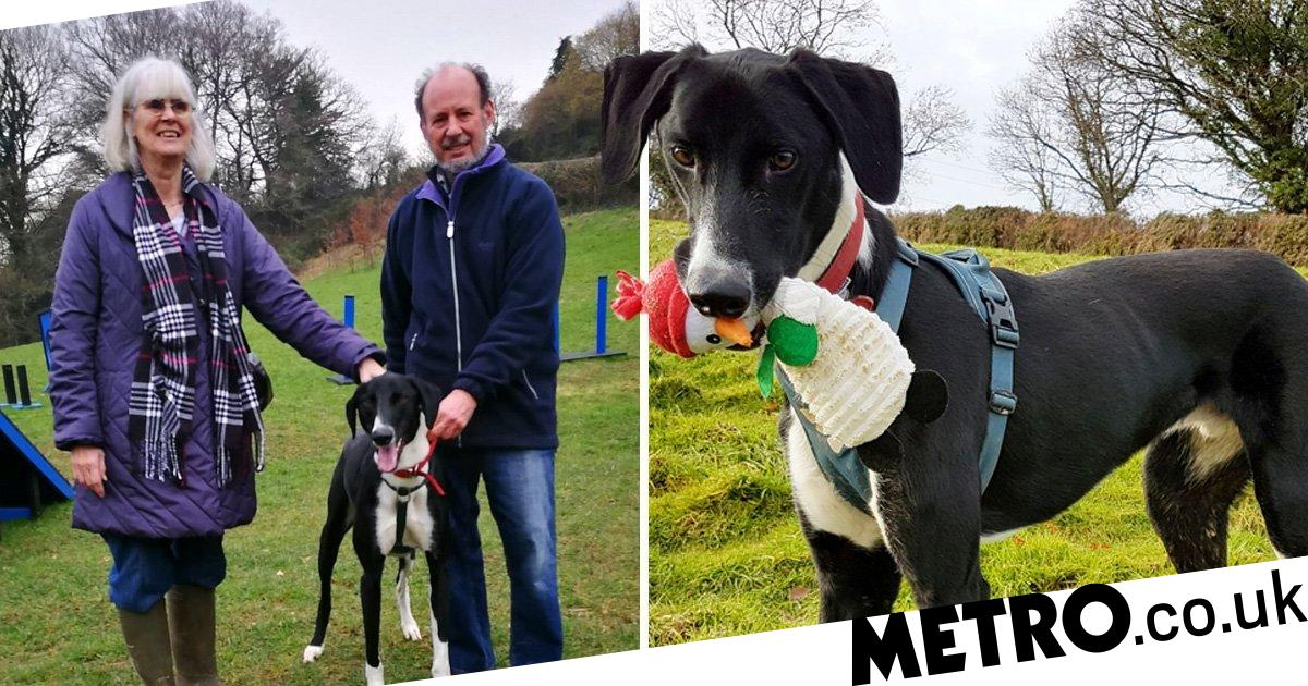 Britain's loneliest dog finally finds forever home after 500 days at shelter