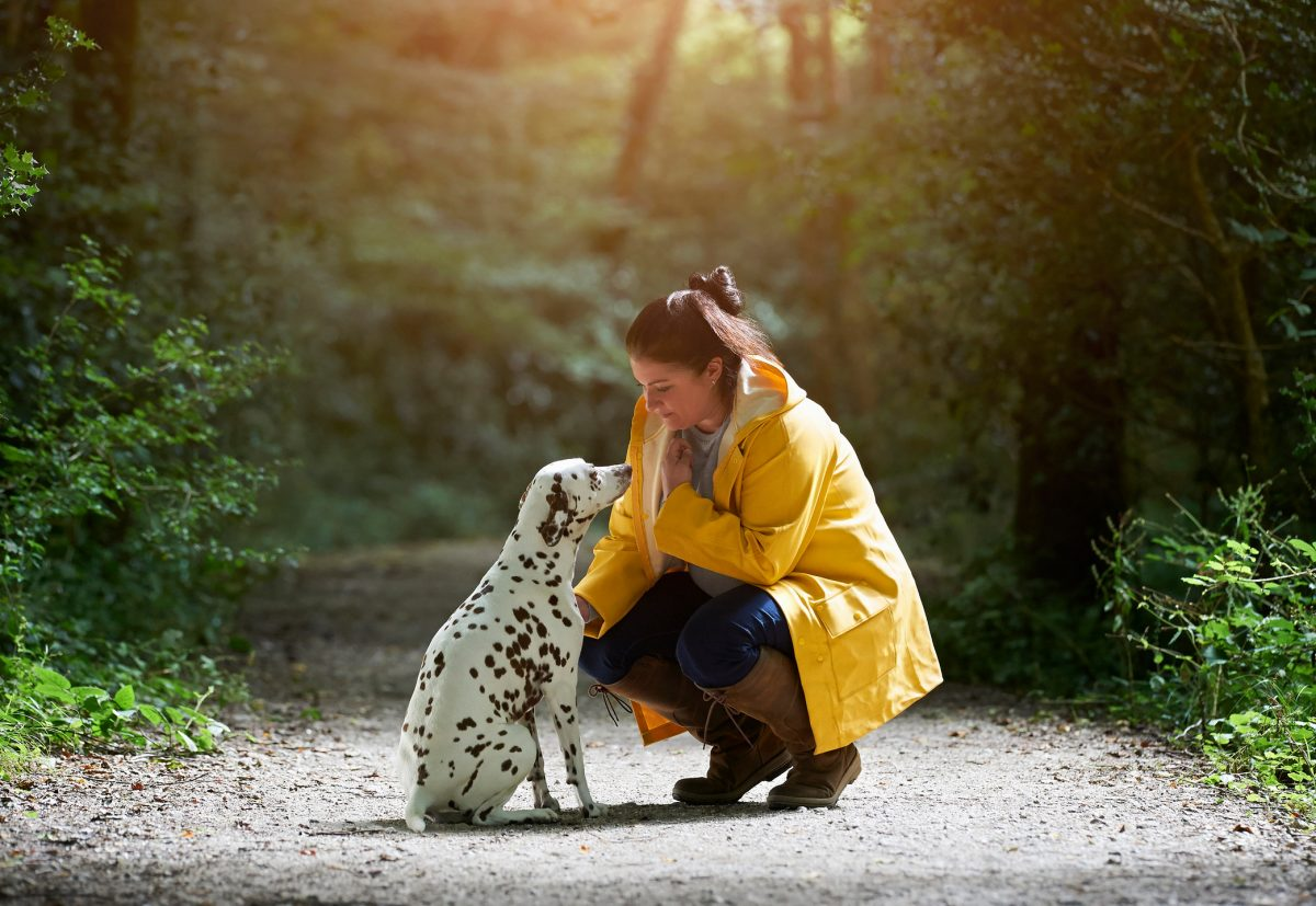 A woman and her Dalmatian dog out for a walk on an idyllic woodland path.