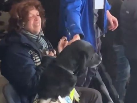 Guide dog celebrates Leeds United's winning goal with its owner in the stands