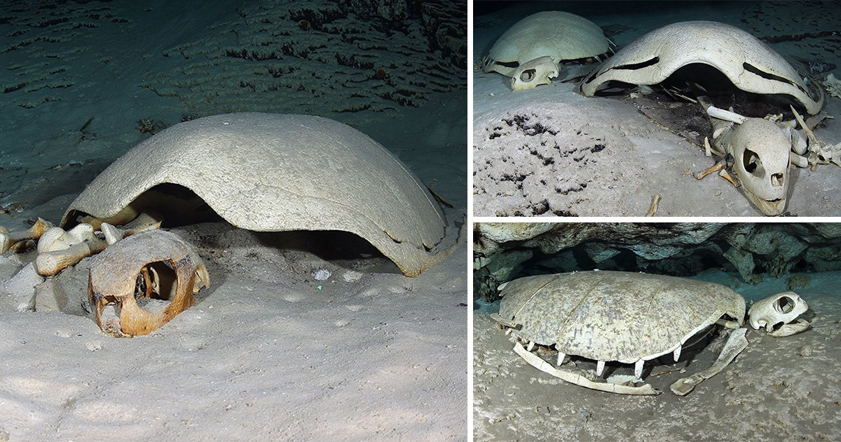 Spooky turtle graveyard discovered lying on bed of Indian Ocean