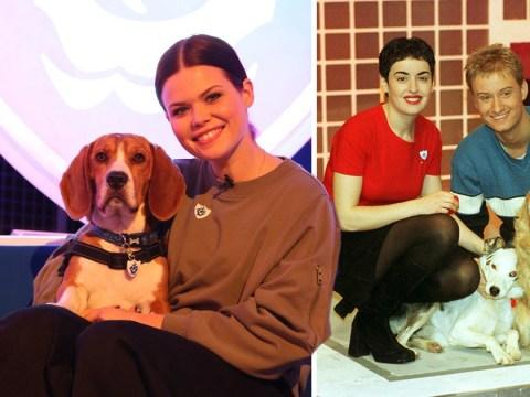 Blue Peter reveals rescue dog Henry as adorable new pet presenter