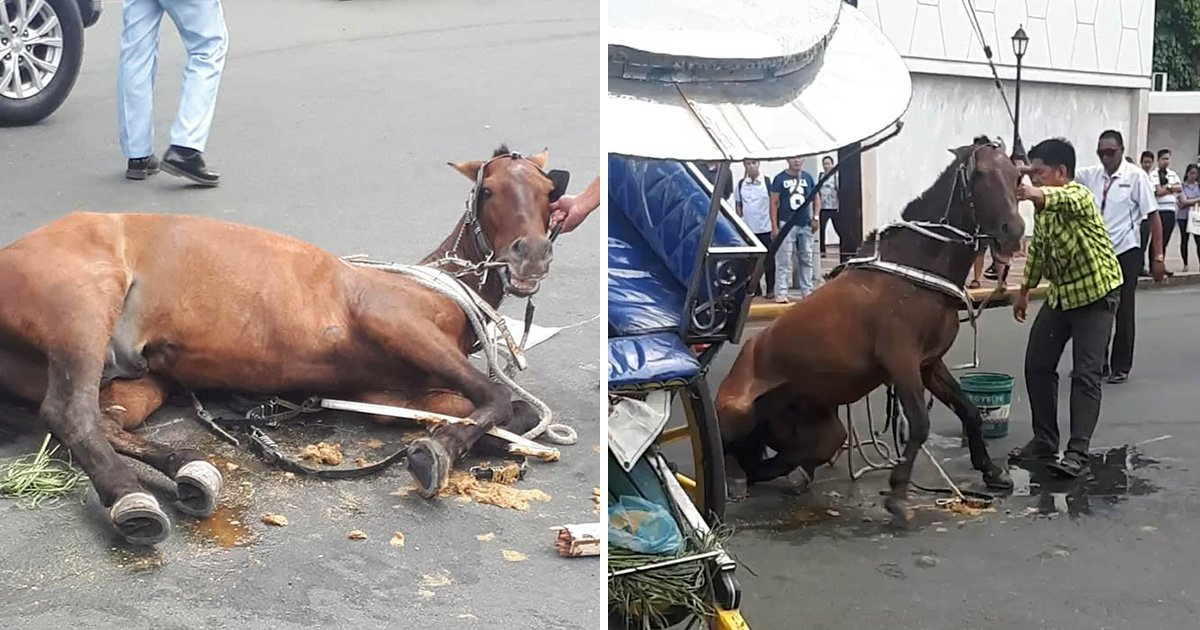 Horse collapses while carrying tourists in 35°C heat