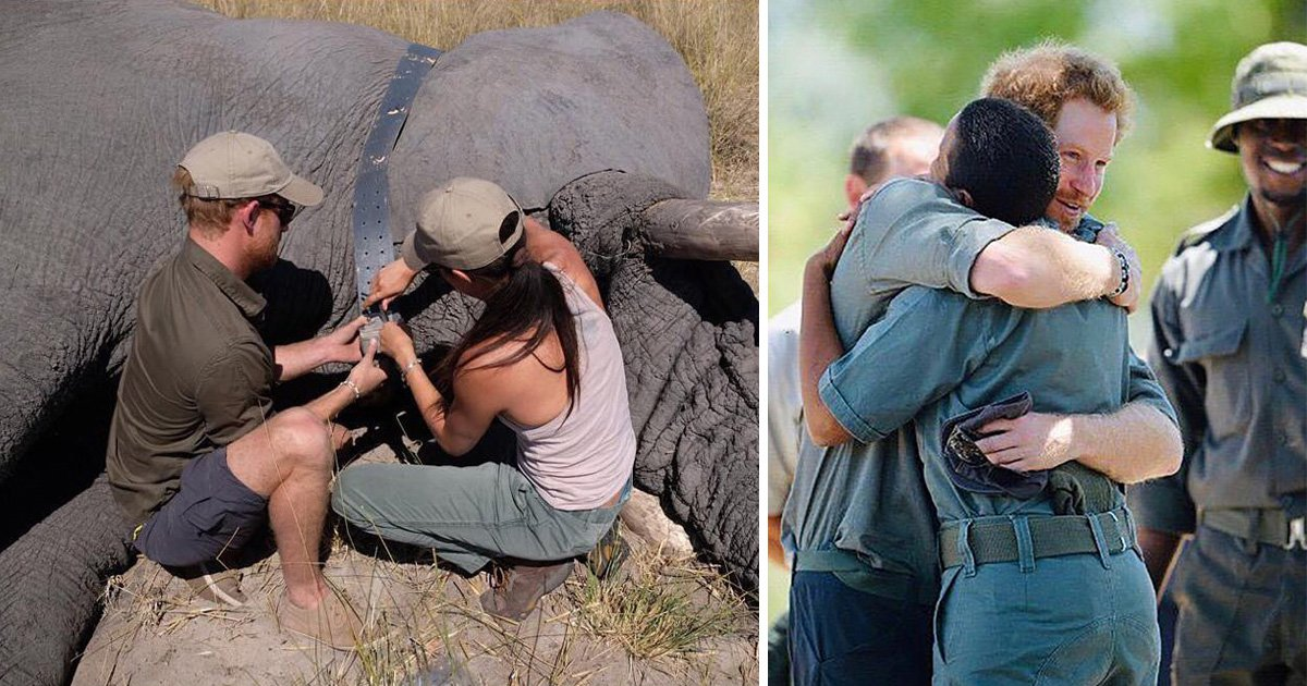 Harry and Meghan tend to endangered elephant in latest Instagram post