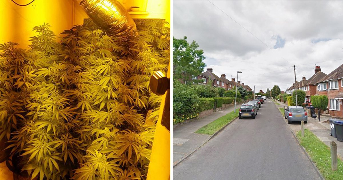 'Weed street' where three cannabis farms worth £900,000 were found