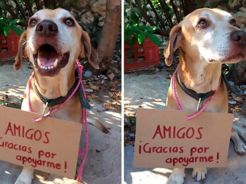 Strangers buy cakes to raise money for stray dog's cancer treatment