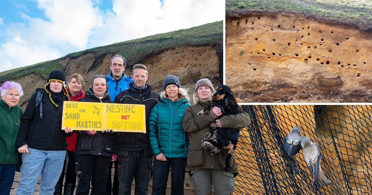Birds face being tangled up and killed after council puts nets on cliffs