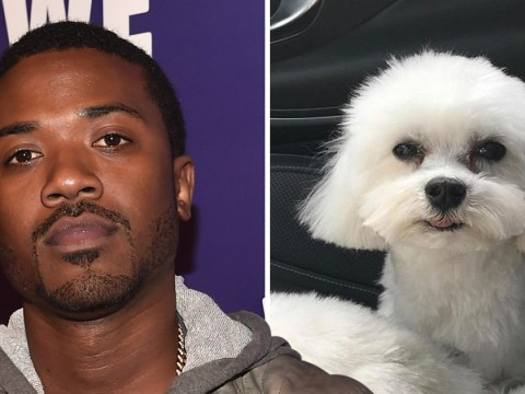 Ray J's adorable dog Boogotti dognapped' and heartbroken singer is offering $20,000 reward