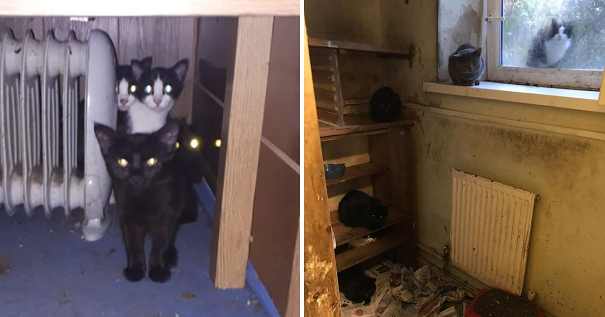 Animal charity rescues 47 cats from elderly woman's flat