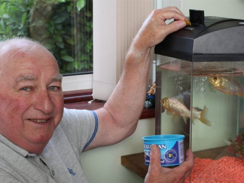 George, Britain's oldest goldfish, dies aged 44