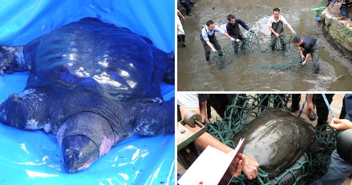 'Only' female member of world's rarest turtle species dies