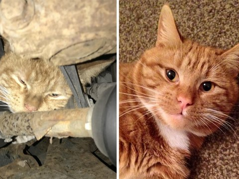 Harry the cat returns home after getting himself stuck in two car engines