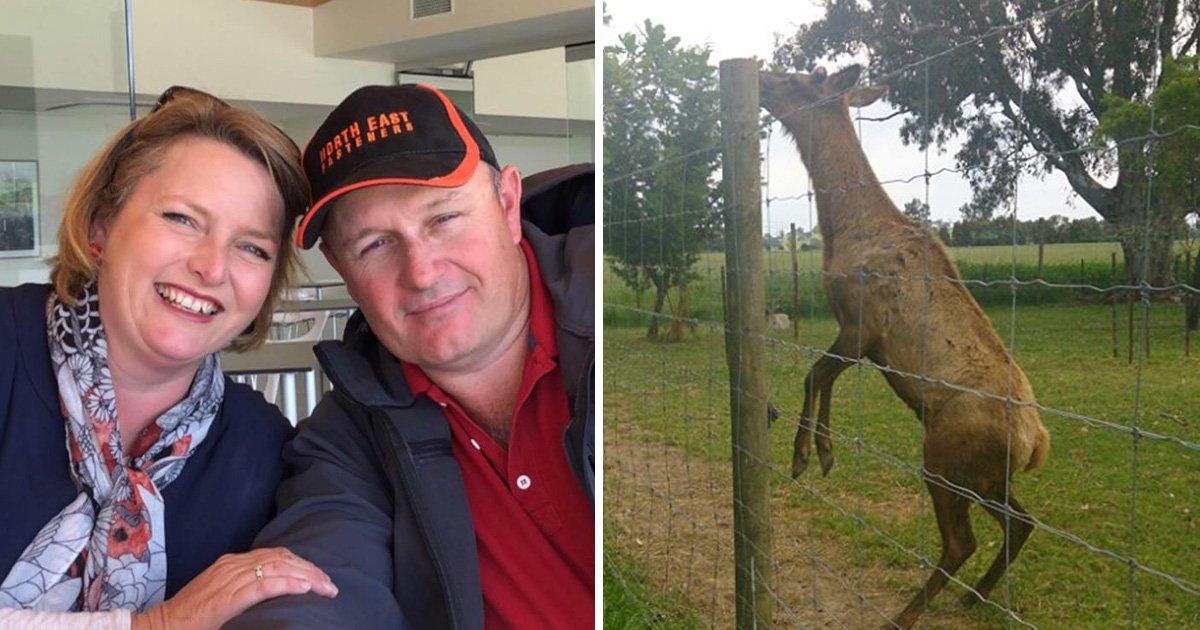 Pet deer kills man and injures wife at feeding time