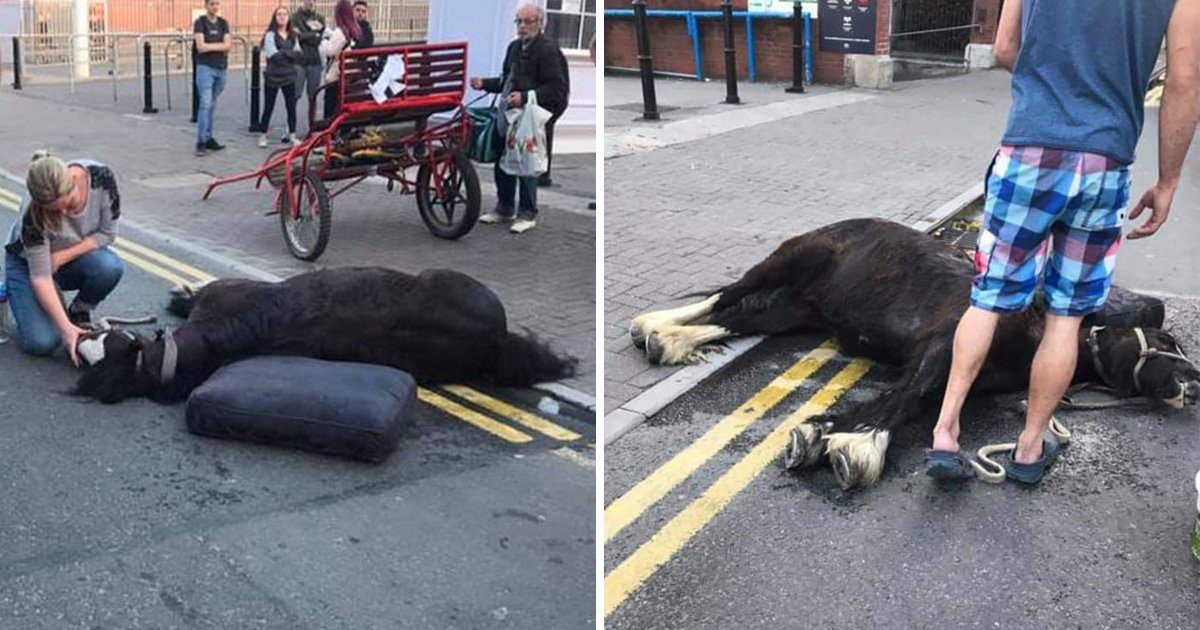 Two arrested after second horse collapses on city street in searing heat