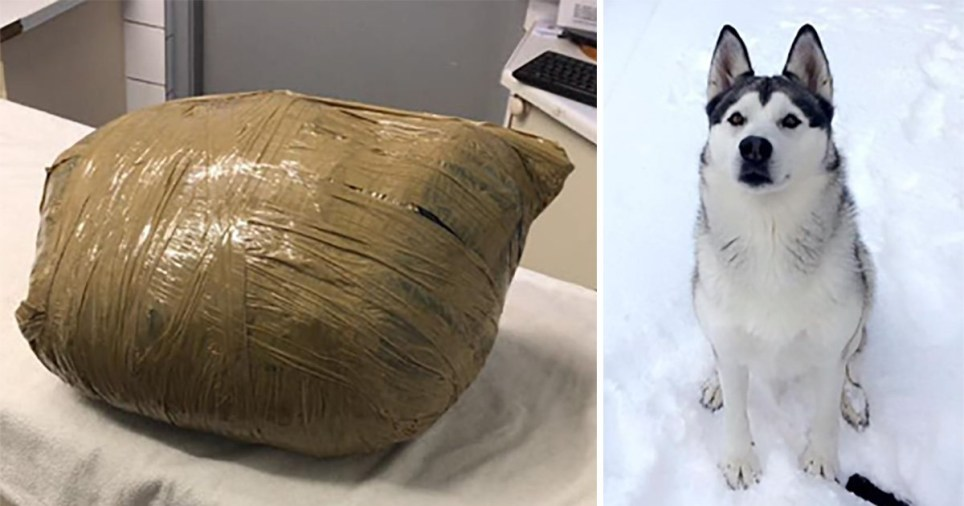 Kirsten Kinch's dog Nova died while in kennels and was returned in a bag sealed with duct tape