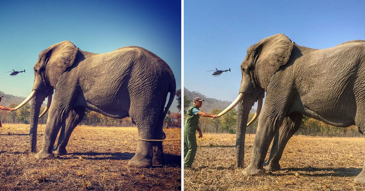 Prince Harry accused of cropping out elephant's tethered leg in picture