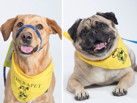First UK airport to get permanent team of therapy dogs to calm nervous fliers