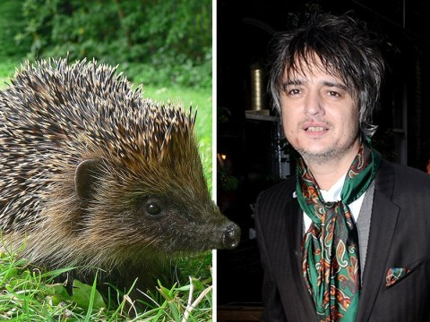 Pete Doherty taken to hospital for infection after being stabbed by a hedgehog