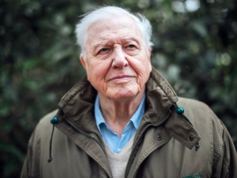 David Attenborough says nature programmes have 'responsibility' to protect the Earth against climate change