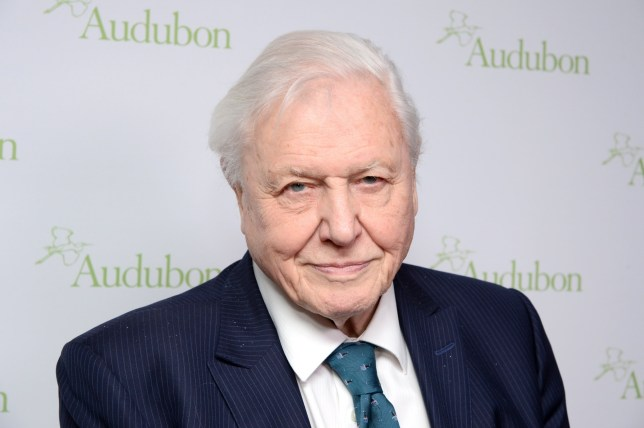 NEW YORK, NY - MARCH 01: Sir David Attenborough attends The National Audubon Society's 2018 New York City Gala at The Rainbow Room on March 1, 2018 in New York City. (Photo by Andrew Toth/Getty Images)