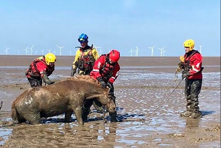 Horse rescue. Two horses and their riders have been rescued after becoming stuck in thick mud while riding on a beach on the Wirral coast. Both young riders were helped to safety by coastguards and one of the horses was quickly freed from the mud.