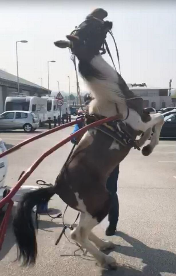 THOUSANDS of people have rallied round to 'save' a pony after it was filmed collapsing in a supermarket car park. A campaign began to rescue 'Gary' the pony after footage showed him, in seemingly thin and poor condition, rear up before falling backwards to the ground at a retail park in Queensferry, Flintshire, North Wales. Credit: Media Wales/Nadine Williams