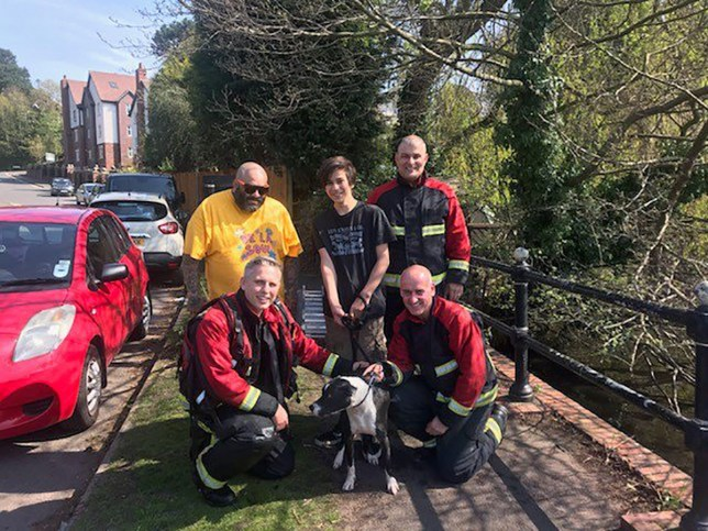 Picture of the West Midlands Fire Service with Jesus the dog
