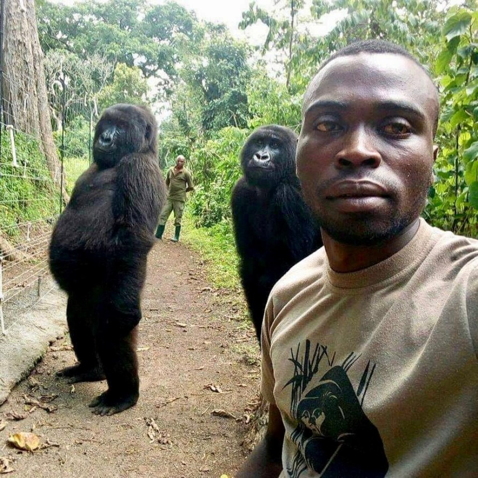 Gorilla selfie park ranger explains how he got incredible picture